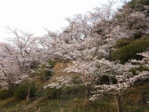 4.茶臼山