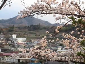 5.茶臼山の桜と…